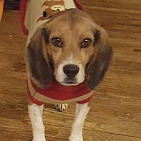 Adopt A Pet :: Simon - Somonauk, IL