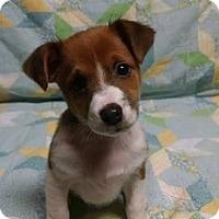 Adopt A Pet :: Barron - Great Falls, VA