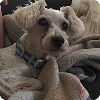 Adopt A Pet :: Wyatt - San Antonio, TX
