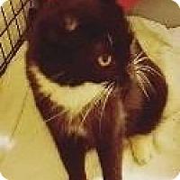 Adopt A Pet :: WINNIE - Hampton, VA