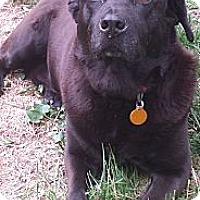 Adopt A Pet :: Blackie - Plainfield, CT
