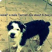 Adopt A Pet :: Diesel - Gadsden, AL