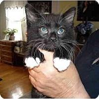 Adopt A Pet :: A. J. - Riverside, RI
