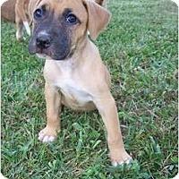 Adopt A Pet :: Faith - ARDEN, NC