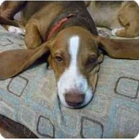 Adopt A Pet :: Jasper Boy - Phoenix, AZ