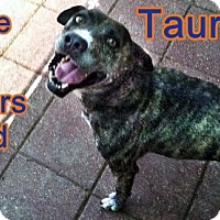 Adopt A Pet :: Taurus - Boaz, AL