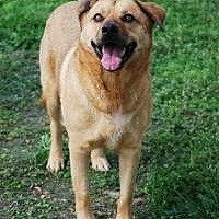 Adopt A Pet :: Tillie - Memphis, TN