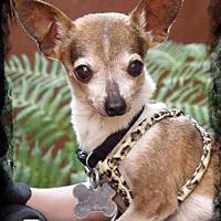 Adopt A Pet :: Timmy - Anaheim Hills, CA