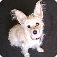Adopt A Pet :: Bordentown NJ - Lucy - New Jersey, NJ