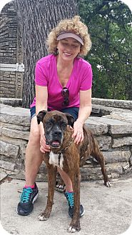 Boxer Dog for adoption in Austin, Texas - Mr. Pinkerton