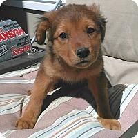 Adopt A Pet :: Serena 💖 ADOPTED! - Saratoga Springs, NY