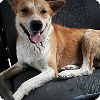 Adopt A Pet :: Scarf Egypt - Westerly, RI