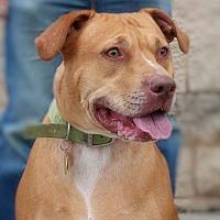 Adopt A Pet :: Hope - Toledo, OH