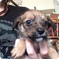 Adopt A Pet :: Marvin - pasadena, CA