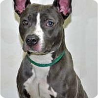 Adopt A Pet :: Yoga - Port Washington, NY