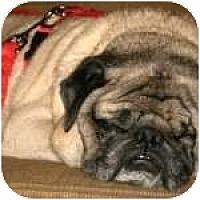 Adopt A Pet :: Buddy Jr - Windermere, FL