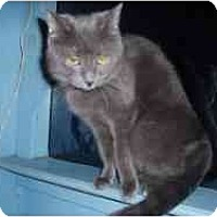 Adopt A Pet :: Stella Sue - Hamburg, NY