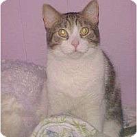 Adopt A Pet :: Cream - Jenkintown, PA