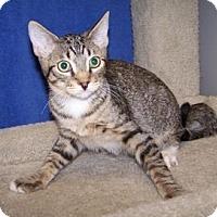 Adopt A Pet :: K-Lori2-Yang - Colorado Springs, CO