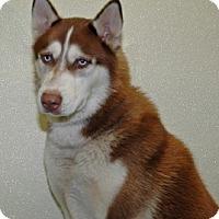 Adopt A Pet :: Knuckles - Port Washington, NY