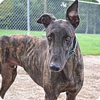 Adopt A Pet :: Hero (First Actionhero) - Chagrin Falls, OH