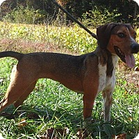Adopt A Pet :: June - Bardonia, NY