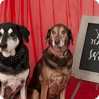 Adopt A Pet :: Leroy - Issaquah, WA