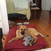 Adopt A Pet :: Behr - Birmingham, AL
