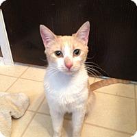 Adopt A Pet :: Caramel - Modesto, CA