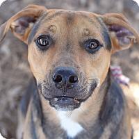 Adopt A Pet :: Cassy - Summerville, SC