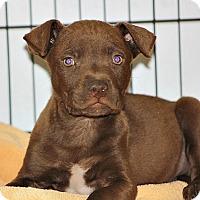Adopt A Pet :: Bert - Philadelphia, PA