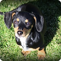 Adopt A Pet :: Madeline - Greenville, SC