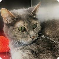 Adopt A Pet :: Artemis - Monroe, MI