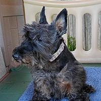 Adopt A Pet :: MacTavish (16) - Dallas, TX