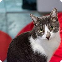 Adopt A Pet :: Robin - New York, NY