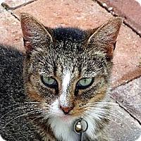 Adopt A Pet :: Binky - Palm City, FL