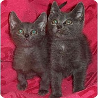 Adopt A Pet :: Bessie - Colmar, PA