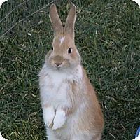 Adopt A Pet :: Lightning - Santee, CA