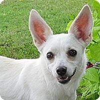Adopt A Pet :: WHITNEY - Humboldt, TN
