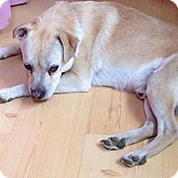 Adopt A Pet :: Cody - Morgantown, WV