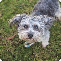Adopt A Pet :: Madison - Los Angeles, CA