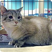Adopt A Pet :: Misty - Pittstown, NJ