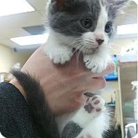 Adopt A Pet :: Tessa - Edmonton, AB