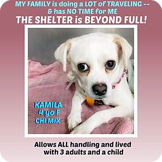 Chihuahua Mix Dog for adoption in Wantagh, New York - Kamila