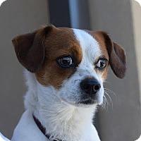 Adopt A Pet :: Remington - Denver, CO