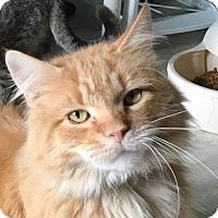 Adopt A Pet :: Lonias - Grand Ledge, MI