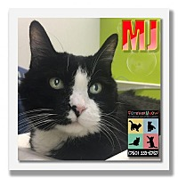 Adopt A Pet :: MJ - Palm Desert, CA
