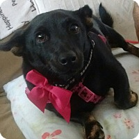 Adopt A Pet :: Miss Ellie - Newnan, GA