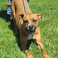 Adopt A Pet :: Skeeter - Reeds Spring, MO