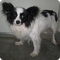 Adopt A Pet :: Daisy - Holton, KS